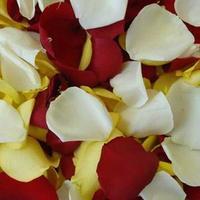 Пелюстки троянд