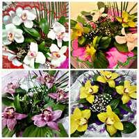 Орхидея 5шт.