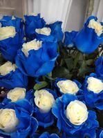 Роза сине-белая